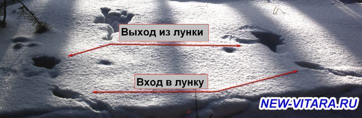 АЛКИС ассоциация любителей костра и солнца Охотники и рыболовы, все сюда  - 3_1.jpg