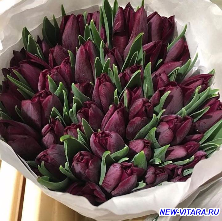 С 8 марта С праздником весны  - IMG-20170308-WA0000.jpg
