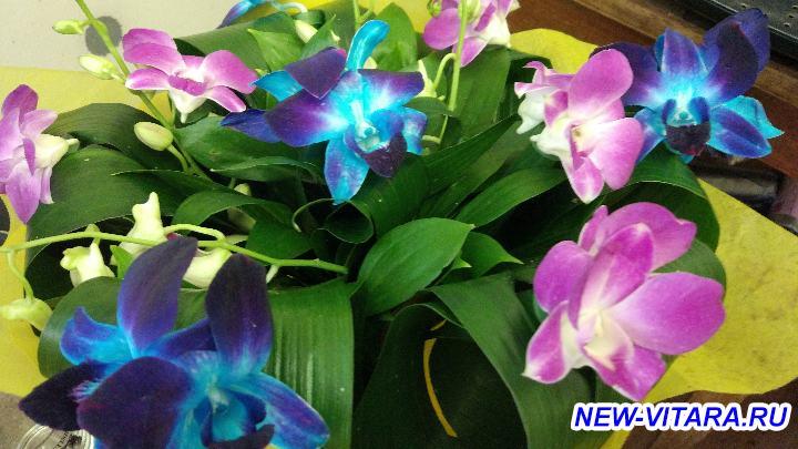 С 8 марта С праздником весны  - Орхидеи2.jpg