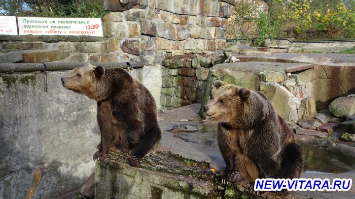 Поездки по Калининградчине - Медведи.jpg