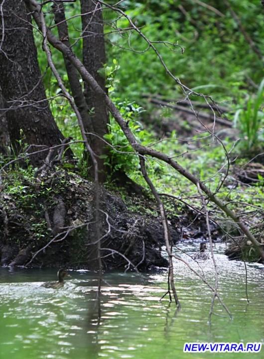 АЛКИС ассоциация любителей костра и солнца Охотники и рыболовы, все сюда  - 3_.jpg